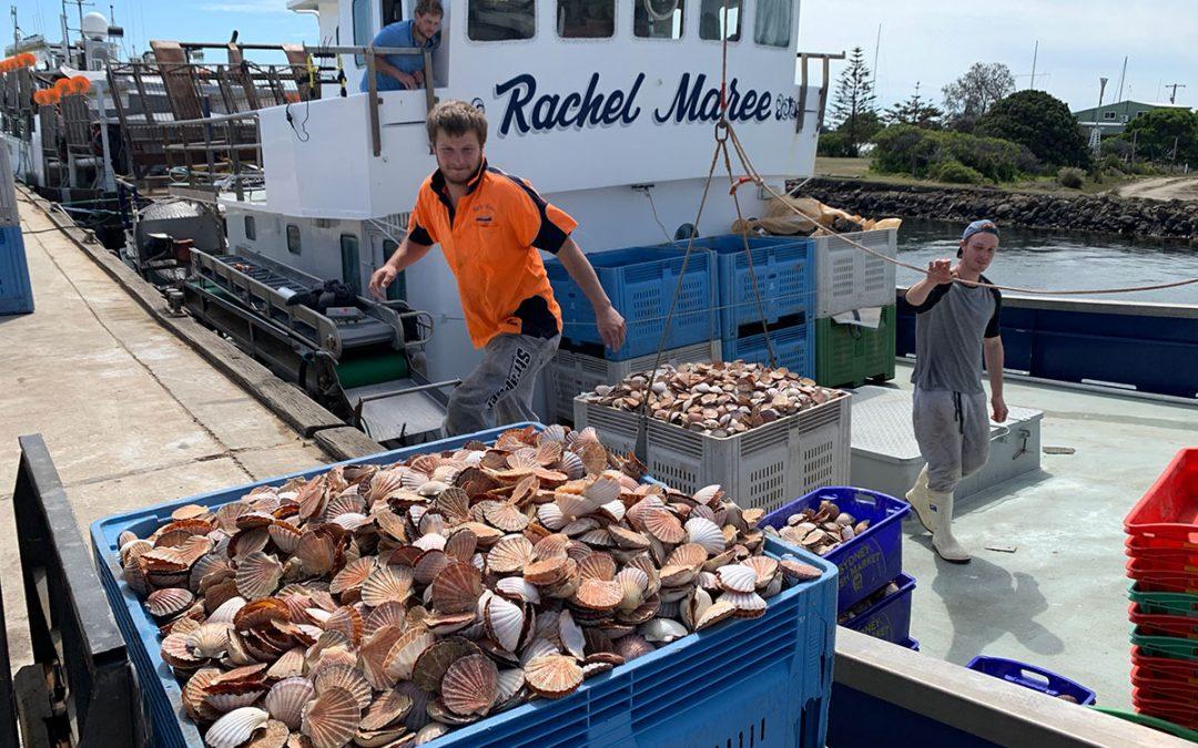 Victorian Ocean Scallop Biomass Survey