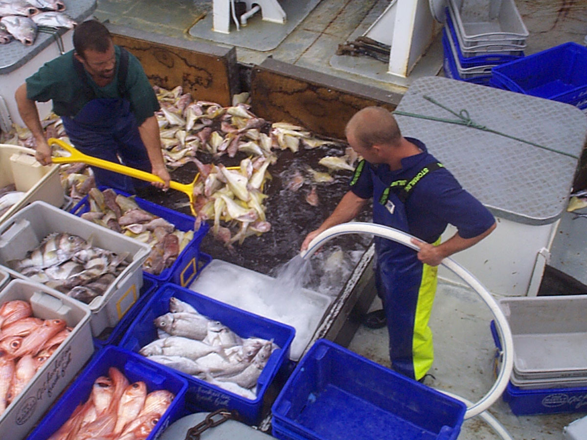 Catch on the deck of a GABTS vessel