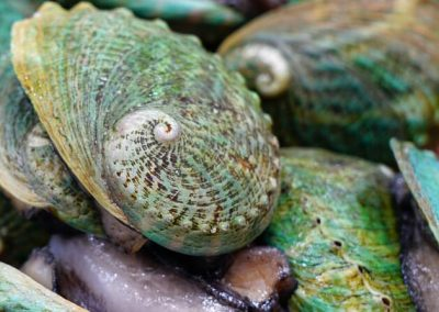Review of Abalone Dive Rates