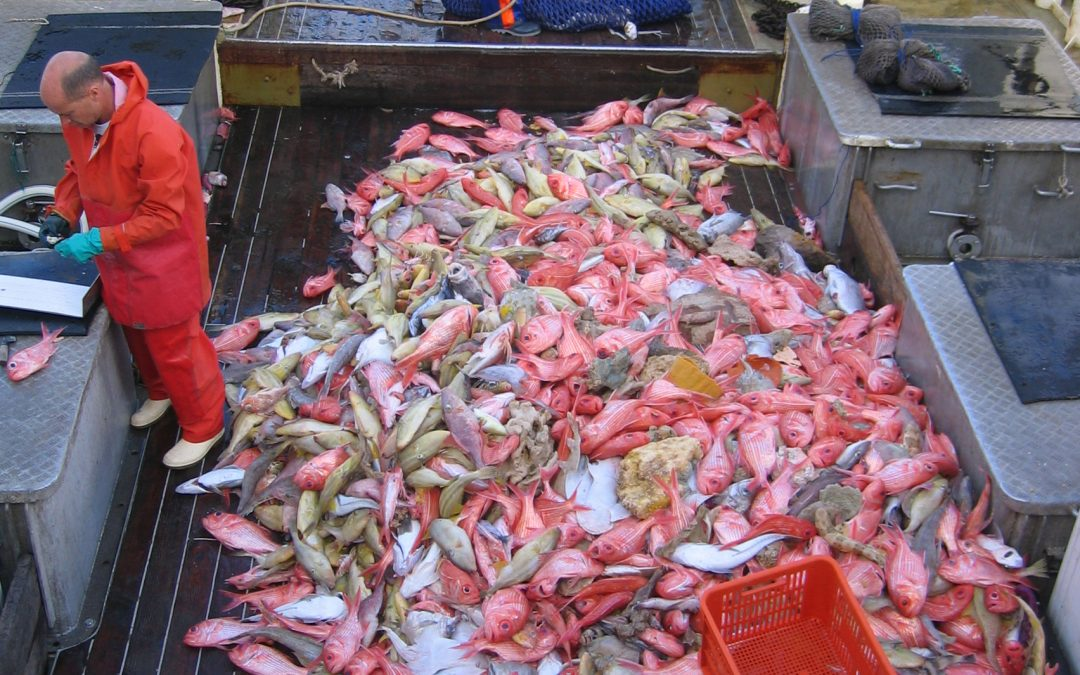 Understanding Factors Influencing Under-caught TACs, Declining Catch Rates and Failure to Recover for many Quota Species in the Southern and Eastern Scalefish and Shark Fishery
