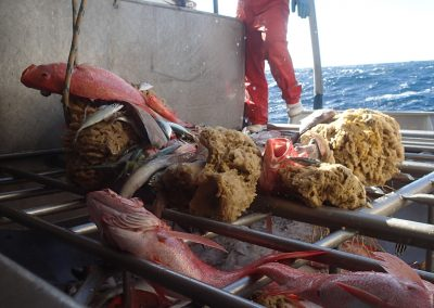 Design and implementation of a tropical snapper trawl survey