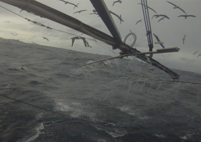 Bird mitigation in the SESSF trawl sector